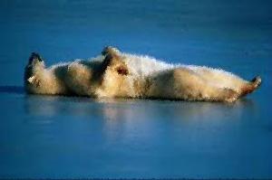 Polar Bear Corpse Pose